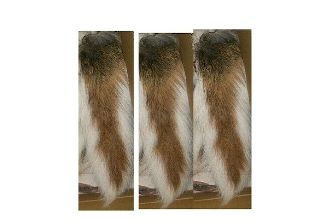 WHITETAIL DEER TAILS TAIL DRIED w BORAX/SALT NO BONE LOT 3 FLY TYING FLIES SCENT